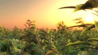 Corsi Vue Creazione Terreni