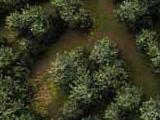 Disegnare ecosistemi in Vue Infinite facilmente